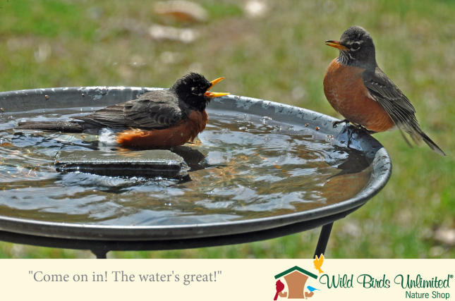 Birdbaths on Sale