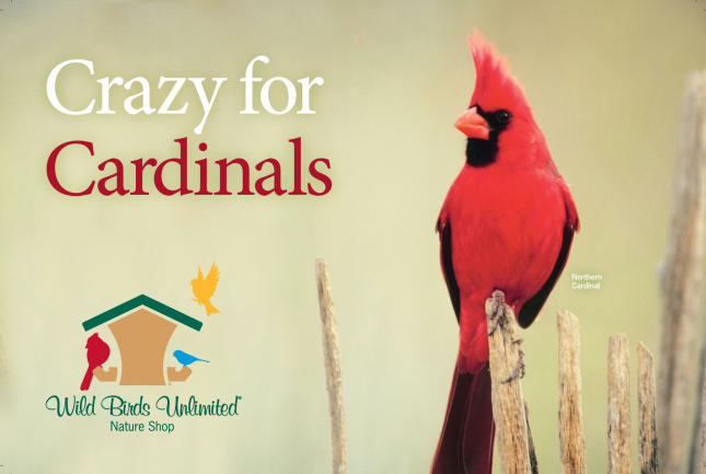 Crazy for Cardinals