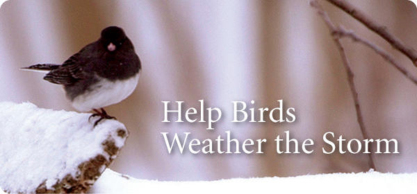 Help Birds Weather the Storm