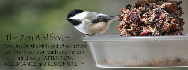 The Zen Birdfeeder Blog